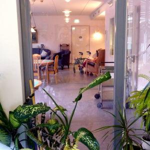 Bilden föreställer ett rum som ses genom en glasdörr. I förgrunden syns gröna växter.