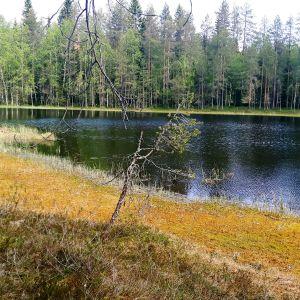Suomaisemaa Juuan Haukisuolta.