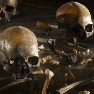 Bilder på skallar och människoben utställda på Finlands Nationalmuseum.