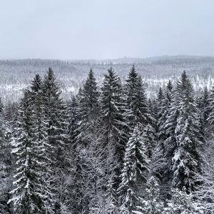 Luminen Torronsuon metsämaisema luontotornista nähtynä