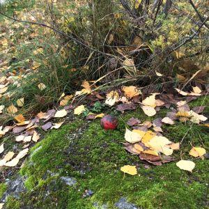 Punainen metallinen korkeuskiintopiste kivessä Lappeenrannan Voisalmessa.
