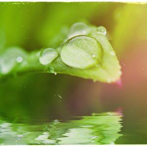 Kuvituskuva: sadepisaroita lehdellä.