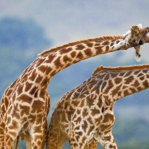 Eläimet osaavat liikkua ketterästi monenlaisissa elinympäristöissä.