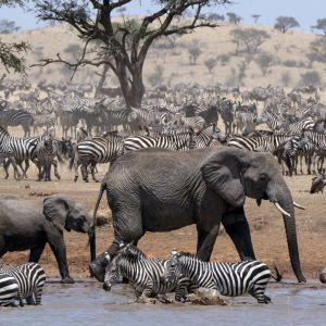 Kuusiosainen luontosarja seuraa vuoden ajan elämää Serengetin savanneilla.