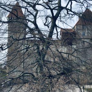 Ett träd med sina grenar skymmer Kuressaare biskopsborg.