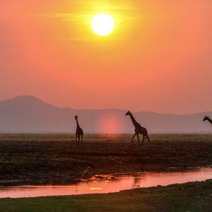 Tansanian luonnonsuojelualueet kattavat elinympäristöjä koralliriutoista ylänköalueisiin.