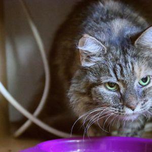 En katt vid en matskål.