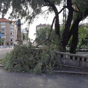 Katkennut puunoksa maassa Turun Aurajokisillan kupeessa.