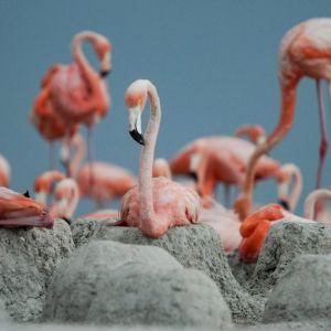 Monet eläimet kulkevat muuttomatkoillaan Meksikon kautta.