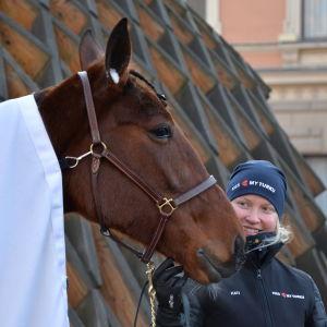 Hästen Kiss My Turku