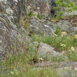 Skärgårdsmiljöstiftelsens naturskyddsområde i Ekenäs skärgård.