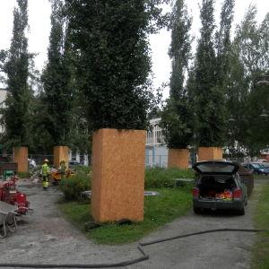 Träden bakom Rådhuset måste skyddas när husgrunden repareras