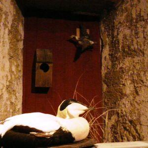 Utställning om säljakt och fågeljakt i Rönnäs skärgårdsmuseum
