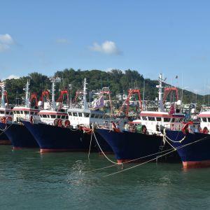 Kinas fiskeflotta är den överlägset största i världen. Allt fler trålare är tillräckligt stora för att de ska kunna segla långt bort från hemlandet.