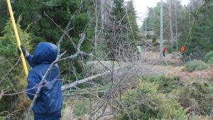 Skogsarbetare röjer bort grenar intill elledningar i skogen.