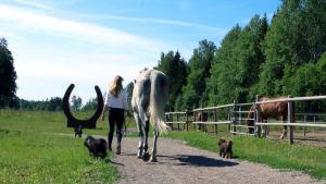 En kvinna leder sin häst längs en sandväg. Man ser dem bakifrån gå ut ur bilden. Två hundar springer brevid dem.