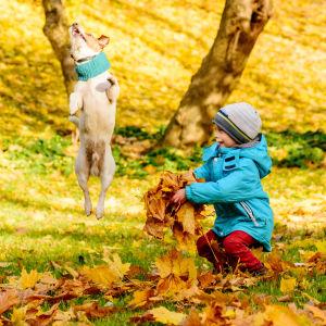 En liten pojke leker med höstlöv i en park. bredvid honom en hund som hoppar runt och leker.