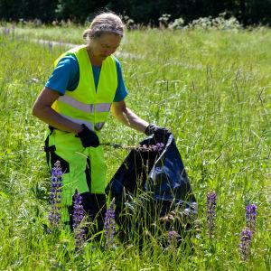 Viola Bärlund plockar blomsterlupin i en svart sopsäck.