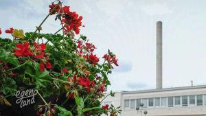 En röd blomma i förgrunden, ett torg och fabrikspipor i bakgrunden.