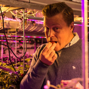 Robert Jordas smakar på en jordgubbe