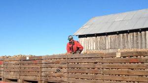 Potatisodlare Glenn Strengell uppe på en vagn fylld av potatis