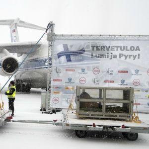 Pandorna Lumi och Pyry anländer till Finland.