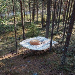 Paistetun kananmunan mallinen taideteos metsässä