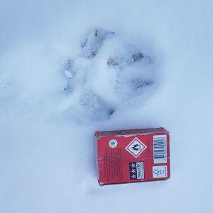 Djurspår i snön