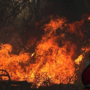 En brandman framför ett eldhav under en skogsbrand i östra Bolivia.