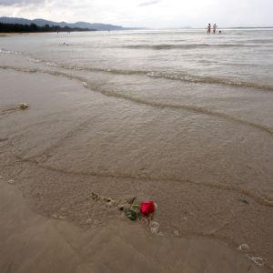 En ros i havet på en strand i Khao Lak i Thailand.