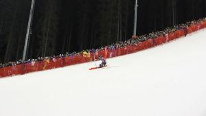 Stefan Hadalin åker slalom.
