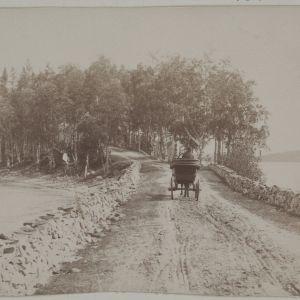 Hevoskärryt ajavat Punkaharjulla 1800-1900-luvun vaihteessa.