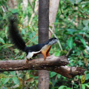 En massa unika djur och växter trivs i regnskogarna på Borneo. Det finns till exempel fler än 30 arter av ekorrar.