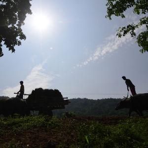 Maanviljelijät pellolla Intian Assamissa kesäkuussa 2020.