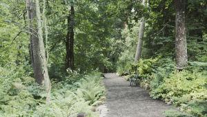 Tiheää metsää, metsässä sorakäytävä, käytävällä puistonpenkki Hörtsänän arboretumissa Orivedellä.