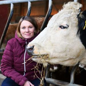 Jessica Aminoff sitter på huk bredvid en stor biffko som äter hö.
