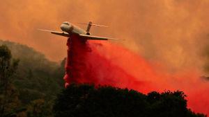 Ett flygplan fäller brandförebyggande medel över en skog i Kalifornien.