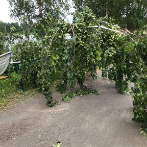 Päivö-stormen har fällt träd i Joensuu.