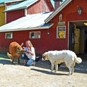 På Fageräng trivs många olika djur tillsammans