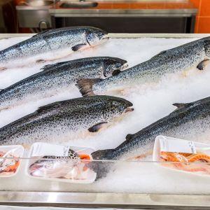 Norska odlade laxar i fiskdisken i butiken.