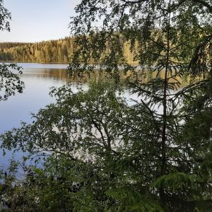 Tyyni Aulangonjärven pinta.