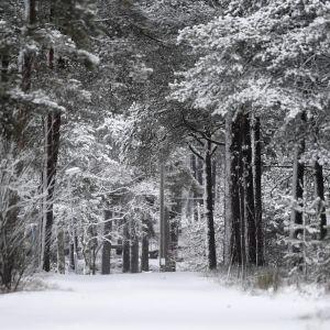 En snöig väg på blåbärslandet i Helsingfors.