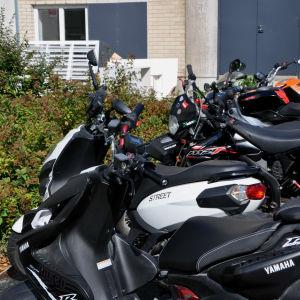 Skotrar och mopeder i rad.