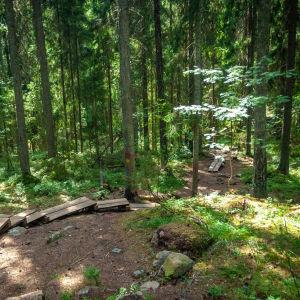 En skog med spångar i en backe. Målade märken på träd som visar var rekreationsrutten går. Grönt och soligt.