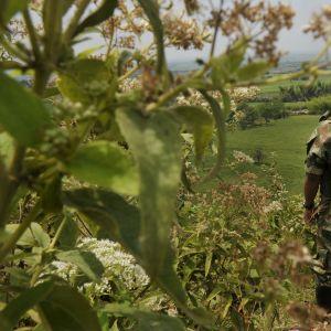 Farc-gerillaman i Miranda i Colombia