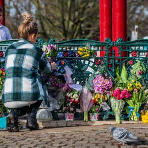 En kvinna sitter på huk framför ett färgglatt blomhav.