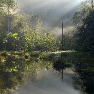 Regnskog i Amazonas.