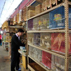 En fågel- och djurmarknad i Shanghai.