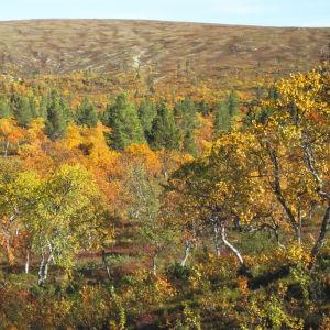 Ruskan värjäämää luontoa, taustalla tunturi.