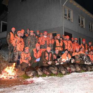 Juvan Koikkalassa ammuttiin lauantaina 14 villisikaa.